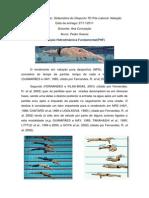 posição hidrodinâmica.docx