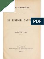 Bosca (1916)-Dos Observaciones a Proposito de La Lacerta Muralis en Espana