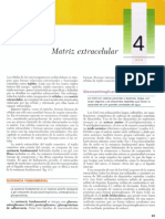 Cap 04 - Matriz Extracelular