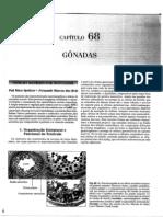 Esteroidogênese Ovariana -Muito Bom