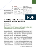 A SUMOry of DNA Replication