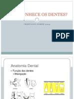 Anatomia Dental