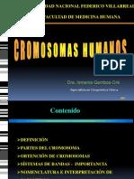 2. CROMOSOMAS UNFV