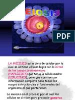 meiosis-100926181446-phpapp01