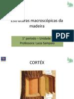 Estruturas Macroscópicas Da Madeira