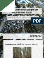 Cultivo de Eucalipto Em Propriedades Rurais