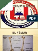 Anatomia Exposicion Del Femur