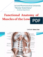 12mg Muscles of Lower Limb