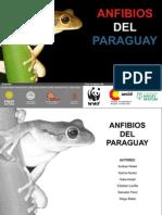 Anfibios del Paraguay