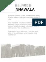 EPK - The Elephants of Pinnawala
