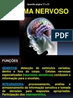 sistemanervoso-120420082913-phpapp02