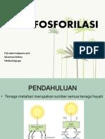 fotofosforilasi
