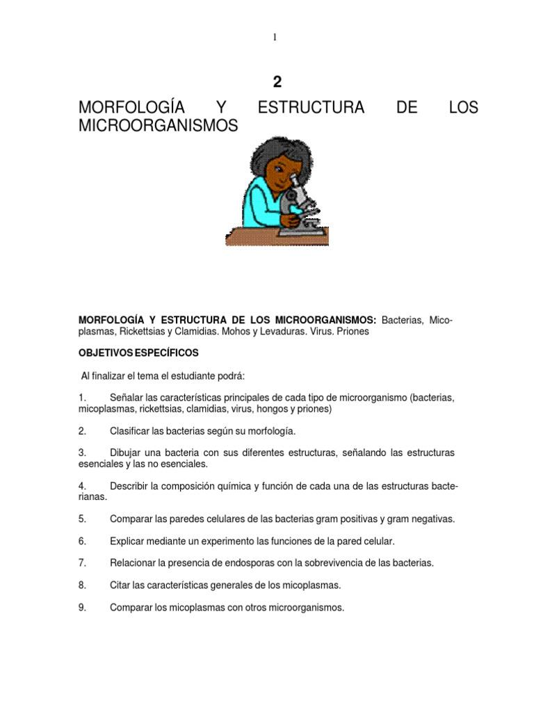 Morfologia Y Estructura De Los Microorganismos Bacterias