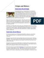 Irish Setter Origin and History