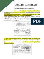 1.-2.Embriologia Dei Mascellari e Degli Elementi Dentari