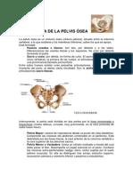 Estructura de La Pelvis Ósea