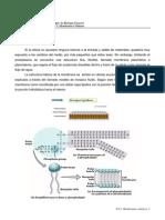 Tp-1 Membranas Celulares