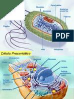 Presentación celula