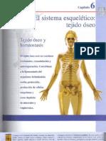 Tema V El sistema esquelético. tejido óseo