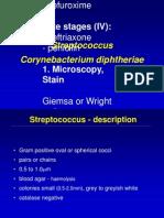 L2 - Strep&Diptheria