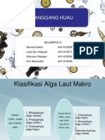 Klasifikasi Ganggang Hijau