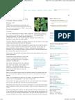 Major Breakthrough on How Viruses Infect Plants (Media Release)