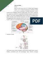 Fisiologi Neurologi