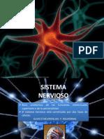 Neurona (1)