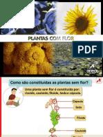 Plantas Sem Flor