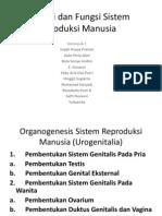Anatomi Dan Fungsi Sistem Reproduksi Manusia