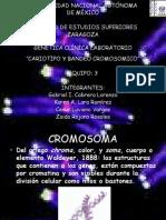 Cariotipo y Bandeo Buena (1)
