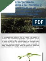 Microorganismos Solubilizadores de Fosfatos y Bacterias Fijadoras de Nitrogeno