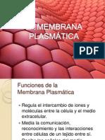 membrana plasmaticas lider