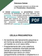 Aula 3 Célula Procarionte e Eucarionte