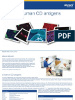 Guide to Human CD Antigens