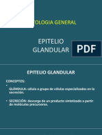 Epitelio Glandular. II (2)