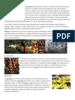 GUATEMALA Agricultura