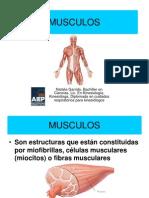 MUSCULOS.pdf