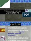 Bacterias 1