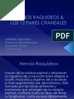 5.Nervios Raquideos & Los 12 Pares Craneales