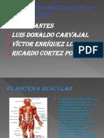 El Sistema Muscular y La Contracción