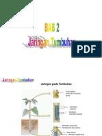 Bab 2 Jaringan tumbuhan