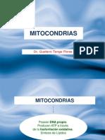 Tema 5 Mitocondrias e Inclusiones