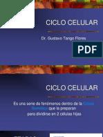 Tema 8 Ciclo Celular