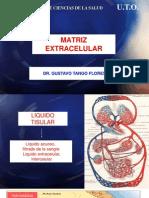 Tema 9 Matriz Extracelular