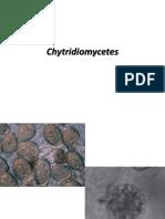 Chytridiomycetes
