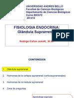 Glandula Adrenal 201410 Bio372