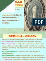 9. SEMILLA