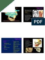 Anatomia Mm Cabeça e Pescoço