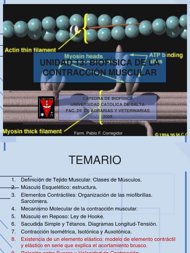 Biofisica Dela Contraccion Muscular